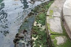 Ракушки и водоросли
