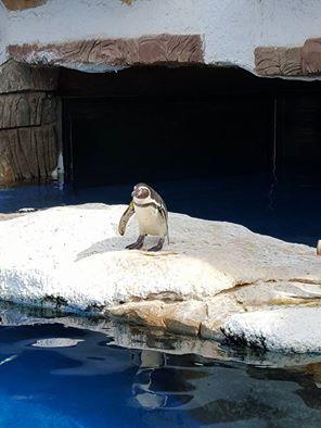 pingvin - Алина и сардина (архив от 28.09.15)