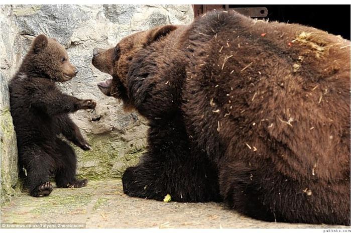medvedica - Звони, мамочка!