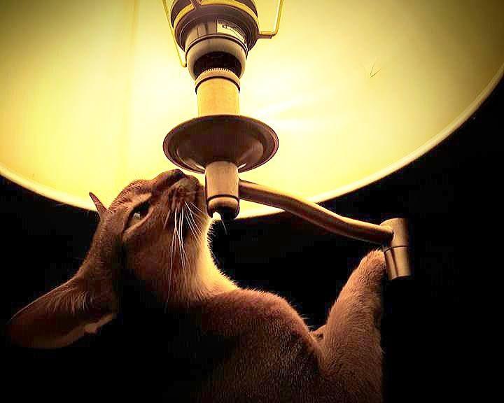 monja lampa 720x576 - Моньячные происки (28.04.15)